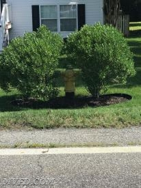 While decorative, these bushes obscure this hydrant.